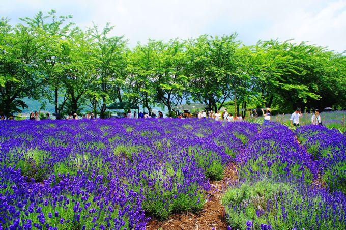 5.八木崎公園