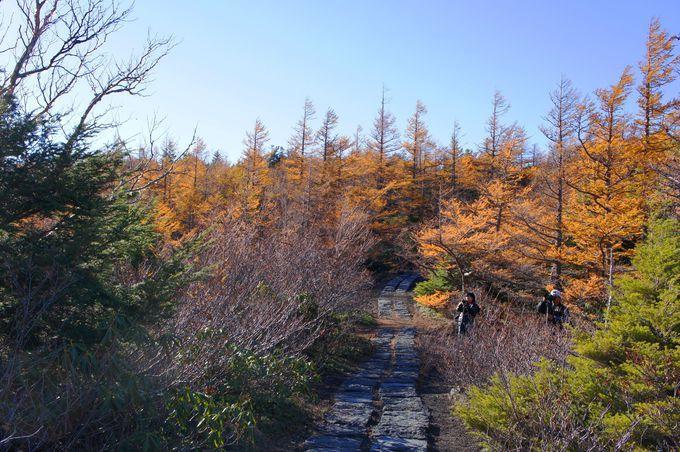展望台へ続く紅葉の散策路