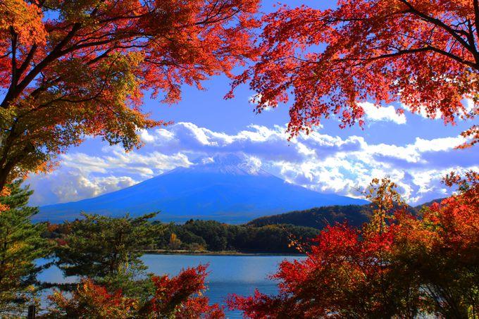 紅葉トンネルから望む絶景富士!秋が漂う湖岸スポット「河口湖」(山梨)