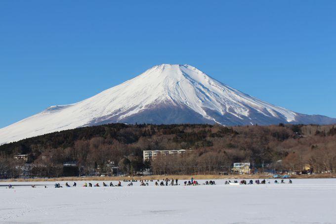富士の麓でワカサギ釣り。湖面凍結すれば氷上でも!