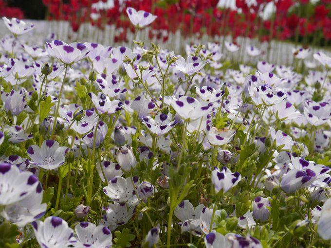 花と緑が四季を知らせる淡路島「明石海峡公園」