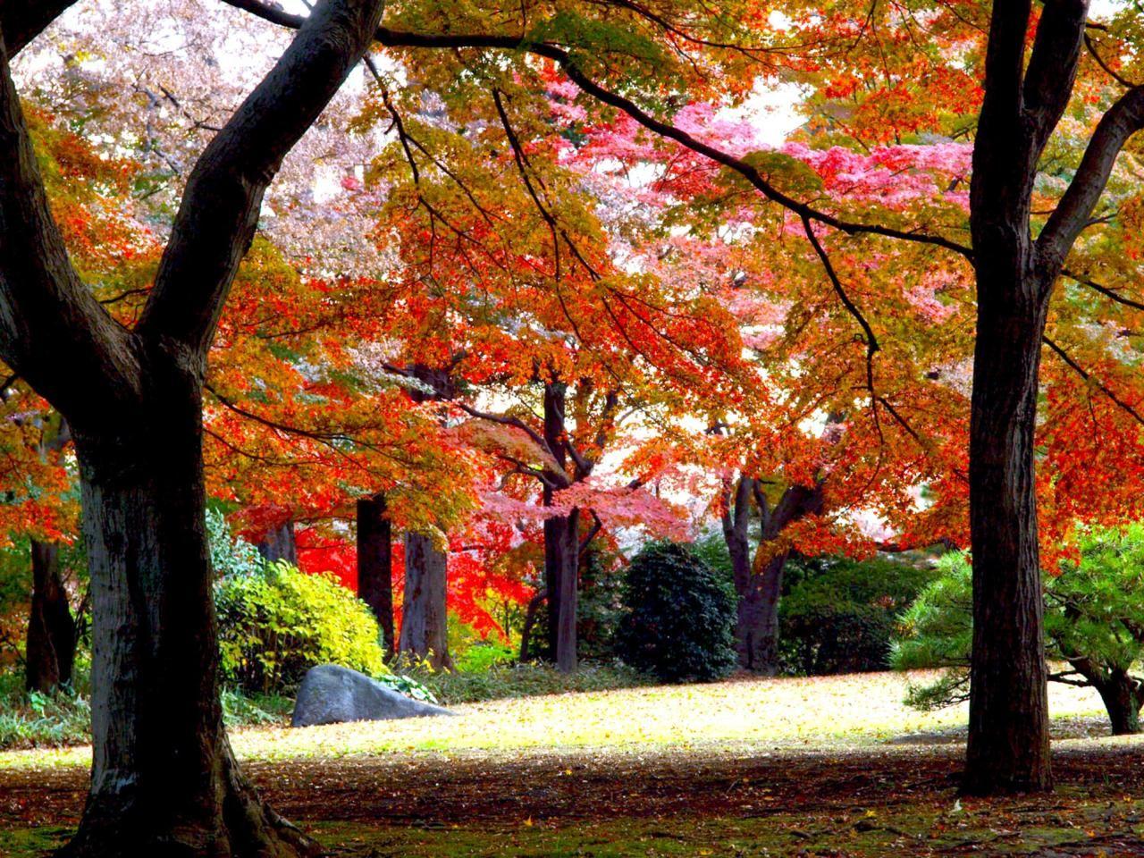 都内の紅葉スポット!国分寺「殿ヶ谷戸庭園」で秋を満喫
