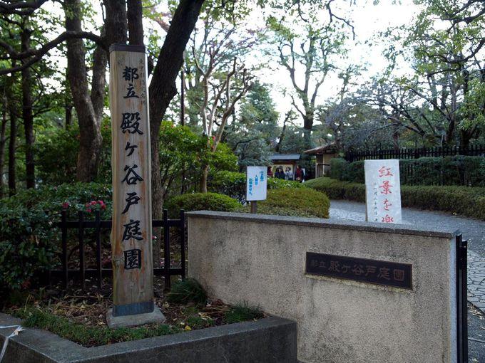 武蔵野の自然を活かした殿ヶ谷戸庭園