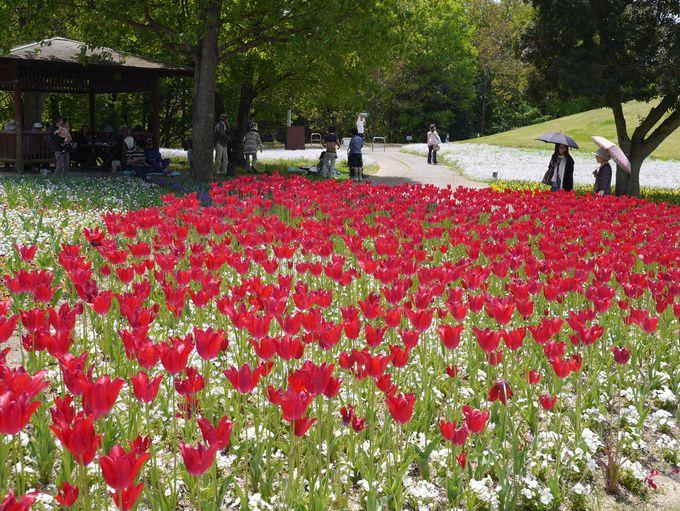七色のカーペットが敷き詰められる春