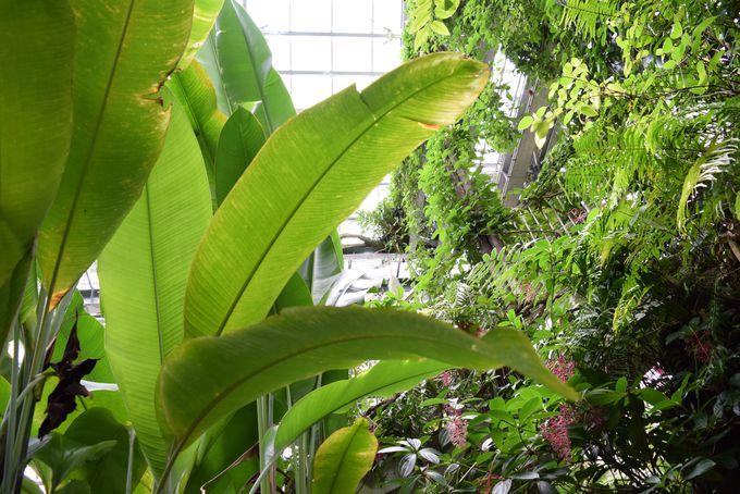 四季を問わず多様な植物を堪能できる『温室』ゾーン