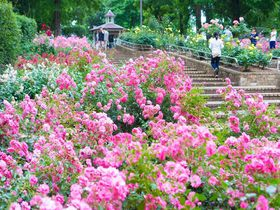 花木の品種が豊富!四季問わず楽しめる相模原北公園の魅力