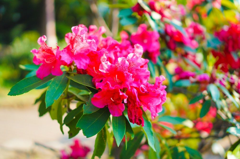 〜春〜木漏れ日とともに楽しむ桜の木々