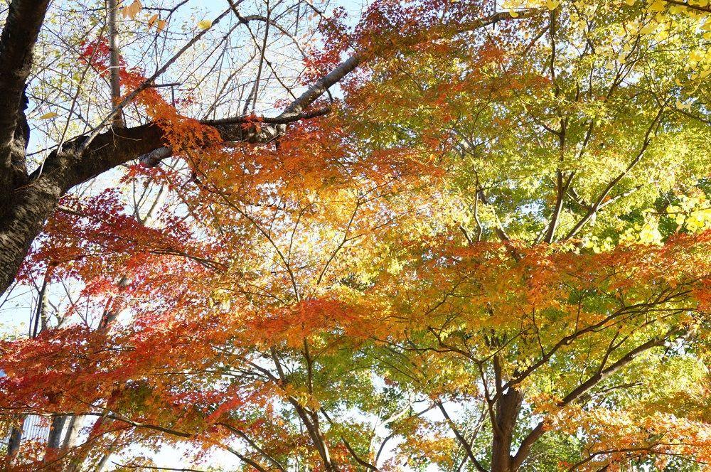 〜秋〜洋風エリアで楽しむバラや紅葉