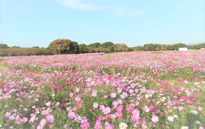 鮮やかに咲き誇る秋の花を堪能