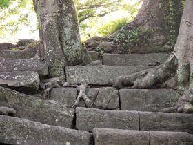 和歌山城の石垣に衝撃スクープ!小人が石階段を歩いてる!?