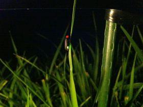 東大寺の夜に幻想的な「大仏蛍」!ここはホタル観賞の穴場スポット♪