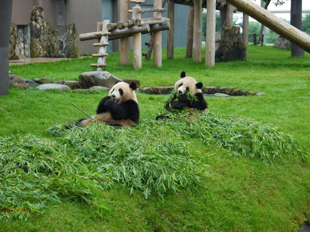 パンダの仕草一つ見るだけで「かわいい〜」と笑顔と歓声が♪
