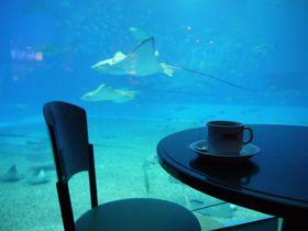 沖縄・美ら海水族館で贅沢な時間を♪世界屈指の水族館カフェ!