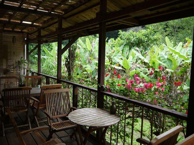 森林浴を楽しめるオープンカフェ!