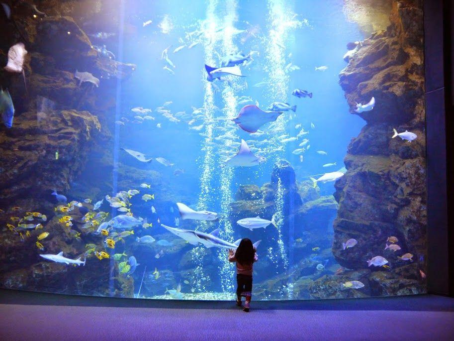 3.「京都水族館」日本の海を表現/京都