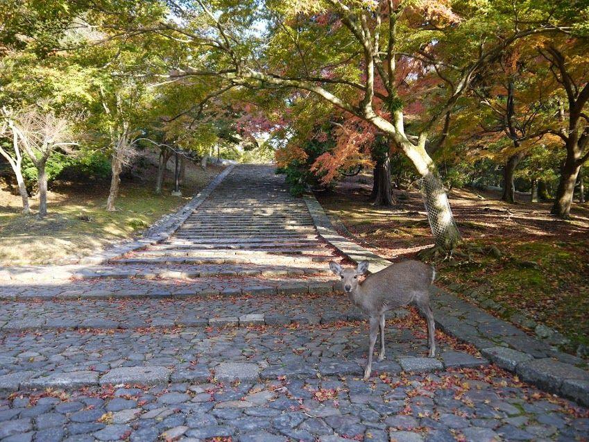 大仏殿から手向山八幡宮・二月堂方面に向かって、ゆっくり散策!
