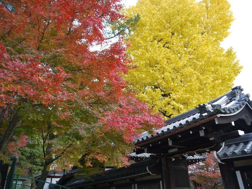 菅原道真が詠んだことで知られる紅葉の名所「手向山八幡宮」