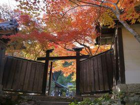 京都・嵐山の紅葉はズバリ!常寂光寺と二尊院がおすすめ!!