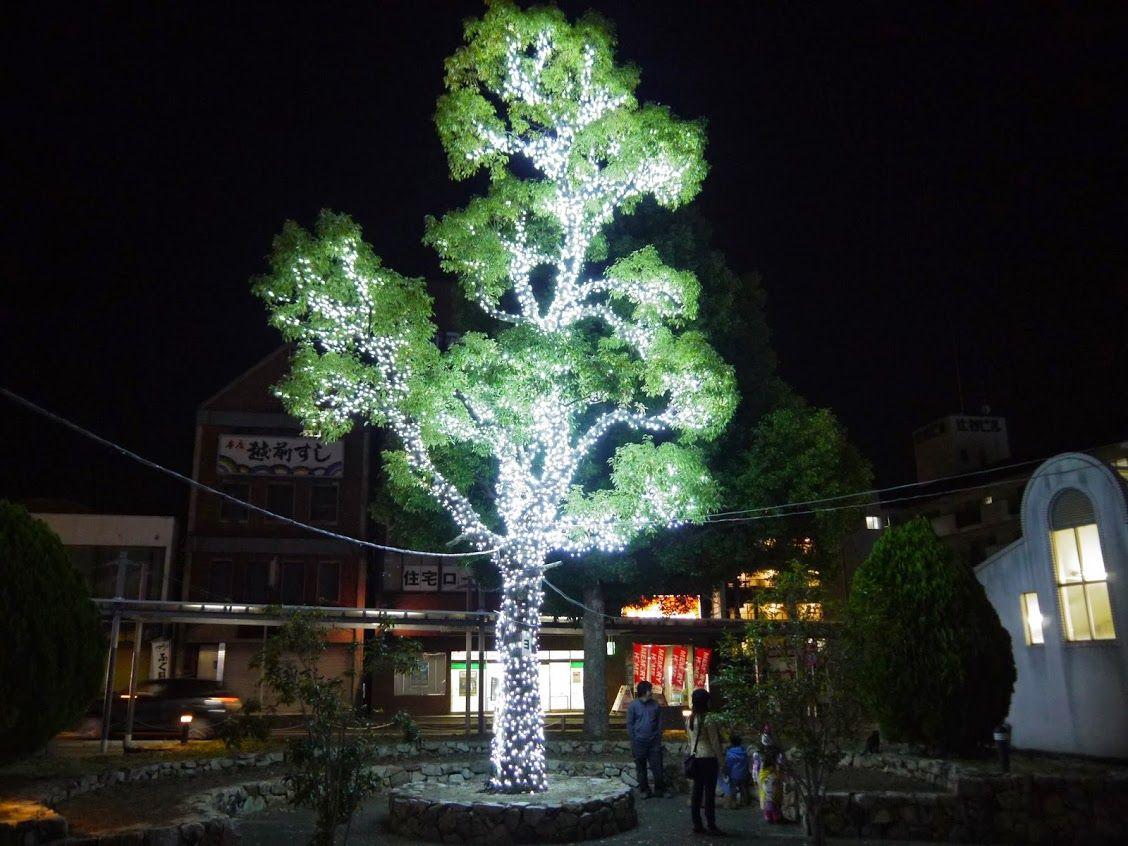 とっても美しい、白く光り輝く木!