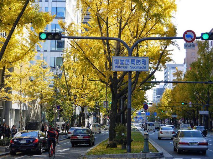 御堂筋いちょう並木は緑から黄色へ、そして黄金色に変化する!