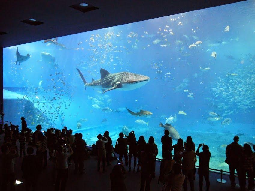 雨の場合は、やっぱり「沖縄美ら海水族館」が一番!