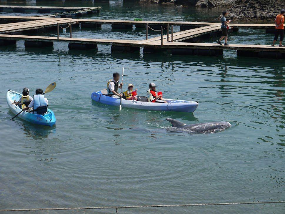 クジラと直接ふれあい体験が出来る「くじらの博物館」