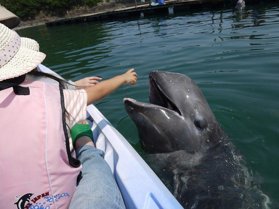 ファミリーでの観光におすすめ!クジラのまち「太地町」