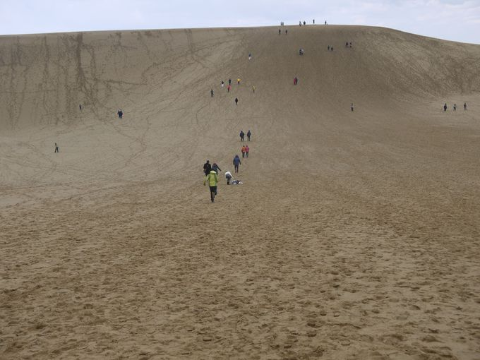 小さな子供の記憶にも残る「鳥取砂丘」は家族旅行に最適!