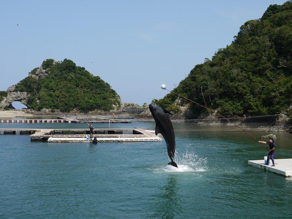 自然の入江を利用した自然プールの「クジラショー」は迫力満点