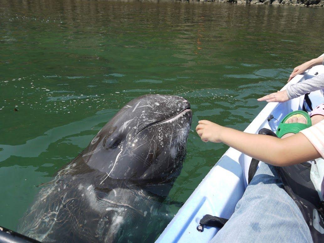 もっとクジラと触れ合うなら「くじらの博物館」にも行ってみよう!