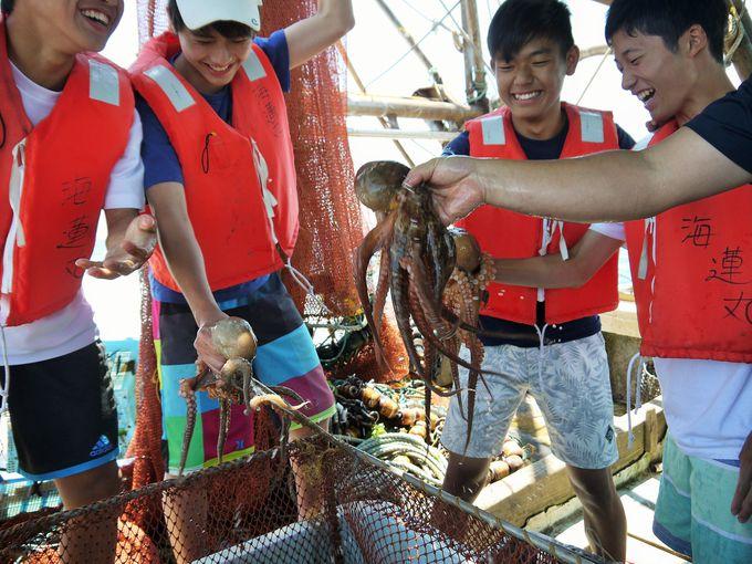悲鳴と笑い声!タコや魚の仕分け作業体験