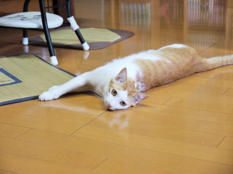 シンプルな部屋から水島が見え、可愛い猫ちゃんも!