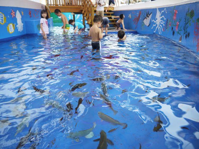 見て・ふれて・楽しい!「越前松島水族館」