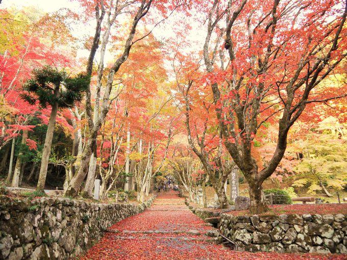 鶏足寺は真っ赤に染まる風景で知られる紅葉の名所