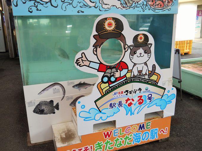 """海の駅の""""なる駅長""""にご挨拶も忘れずに!"""
