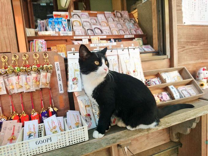 境内には人懐っこい猫が沢山いるニャン
