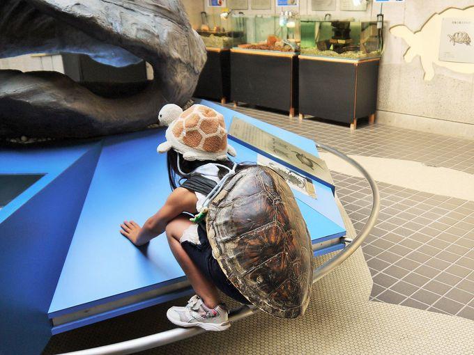 「日和佐うみがめ博物館カレッタ」でウミガメ体験