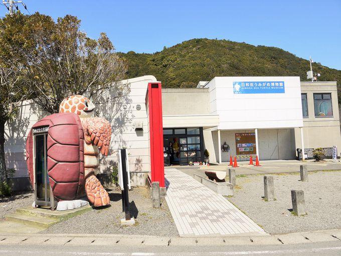 世界でも珍しい!ウミガメを専門とした博物館