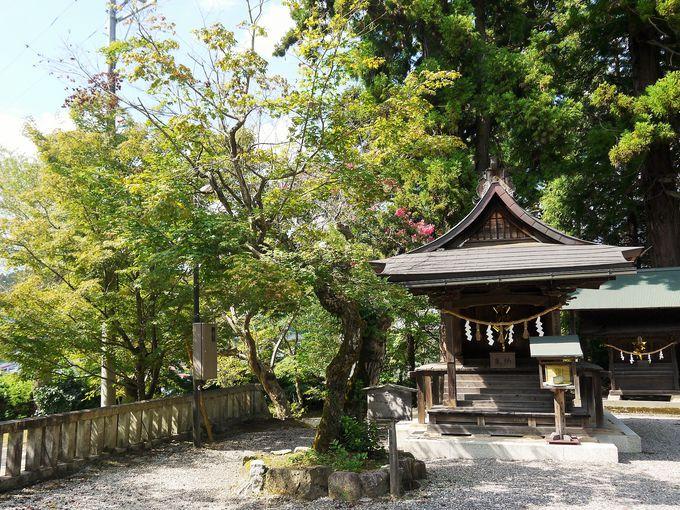 明智光秀ゆかりの人麻呂神社&手植えの楓