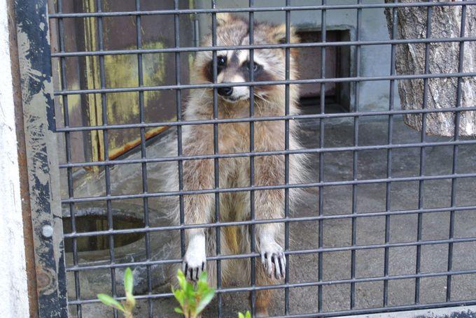 子連れでの観光にピッタリ「仙台市八木山動物公園」