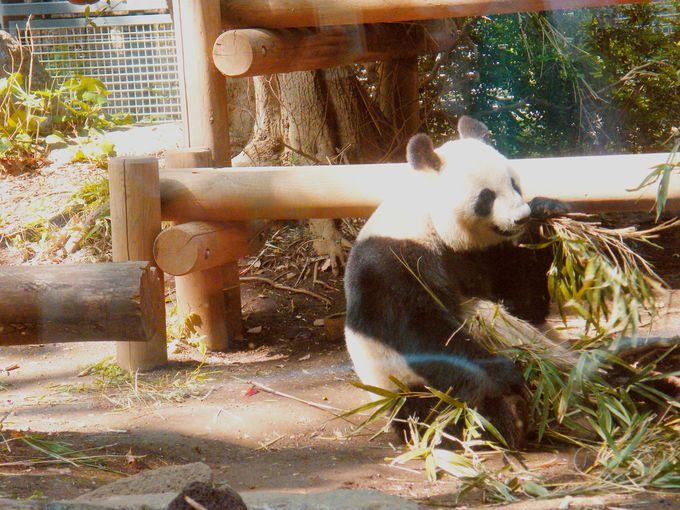 1.恩賜上野動物園