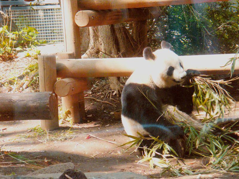 パンダだけじゃない!一日楽しめる東京都・恩賜上野動物園の楽しみ方