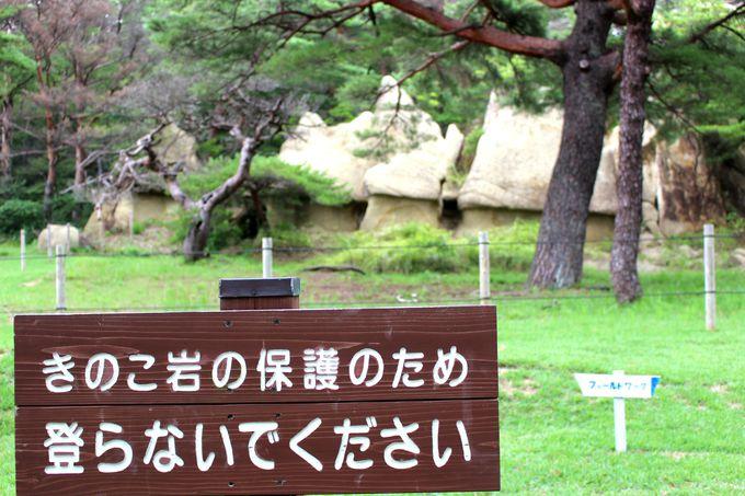 きのこ岩には登らないで!