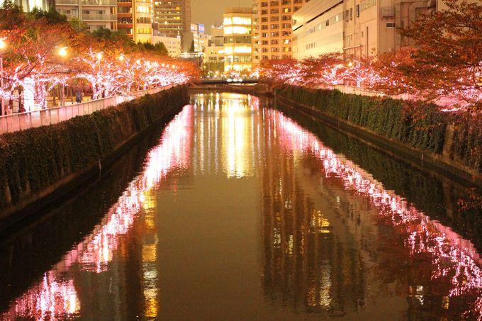 東京・目黒川で冬の桜を堪能!「目黒川みんなのイルミネーション」
