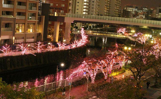 目黒川沿いの両脇がピンクの光に彩られる