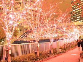 3個だけ花びら型のLEDが?目黒川に咲き誇るイルミネーション・冬の桜を堪能!