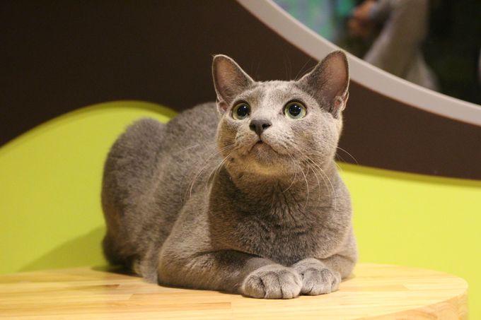 猫にまみれるキャットパラダイス