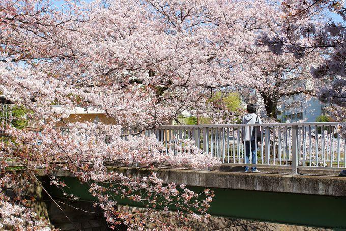 恩田川に架かる橋は桜のフォトスポット