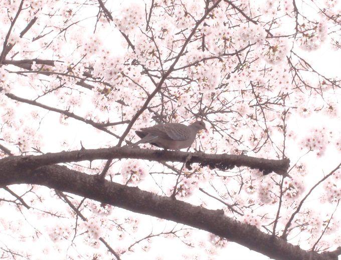 可愛い鳥たちにも出会えるかも?