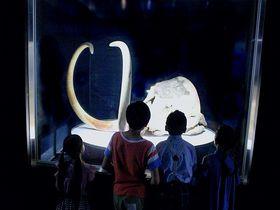 世界初公開多数!「マンモス展」東京で冷凍マンモスに会おう